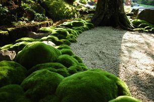 Trädgård Grus : Roos trädgård
